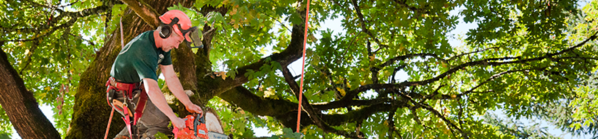 Tree Removal Services in Edmonton and Calgary
