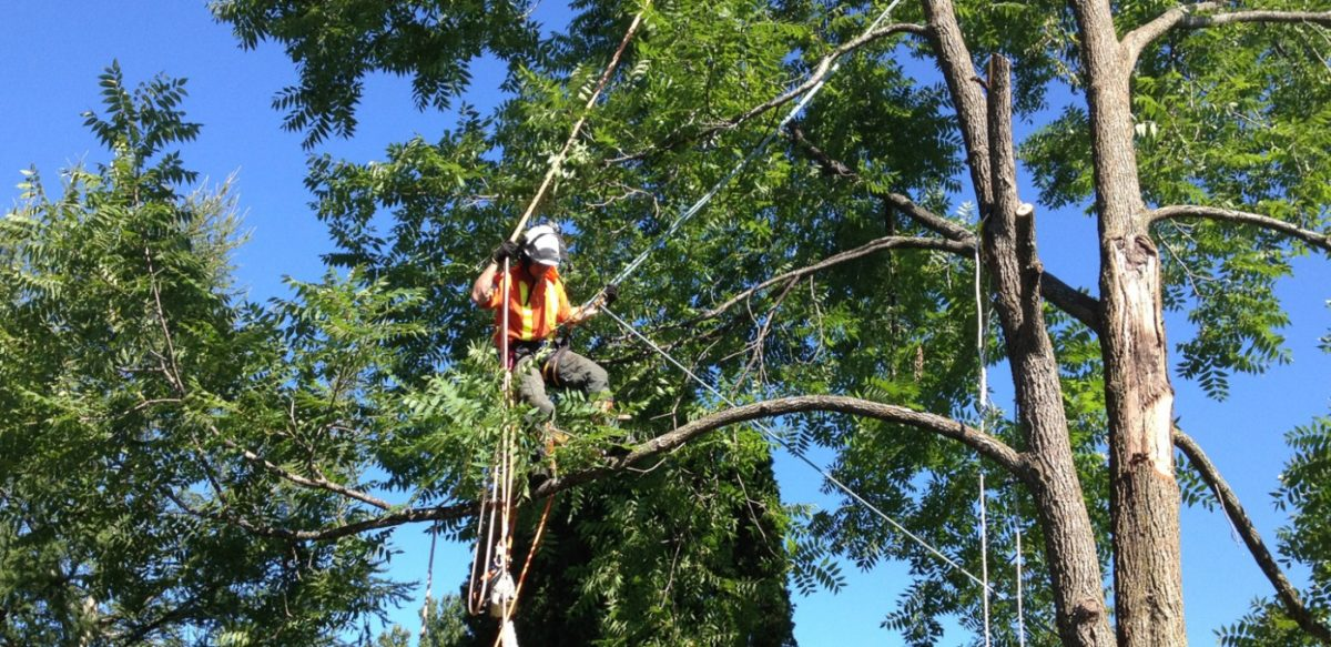 Factors to Consider When Choosing a Tree Removal Service