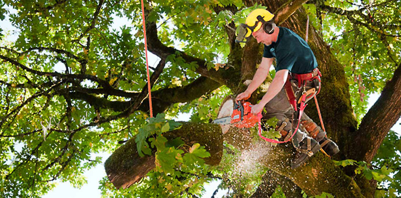 Finding A Reputable Tree Removal Contractor