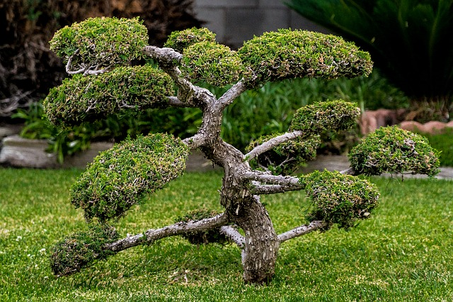 Small Tree Plant Gardening Bonsai Miniature